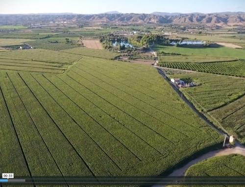 Agricultura Espectacular